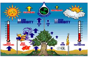 Peranan Komponen Abiotik Pada Lingkungan