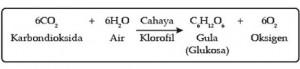 Bagan fotosintesis