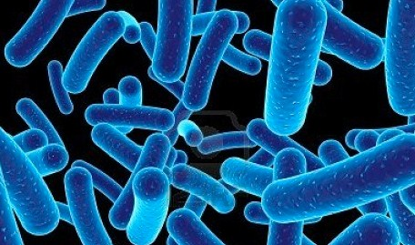 Pengertian Mikroorganisme dan Macam-Macam Mikroorganisme