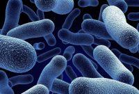 Pengertian Bakteri Anaerob dan Contohnya