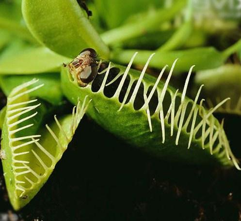 13 Macam Tumbuhan Pemakan Serangga Yang Ada di Dunia