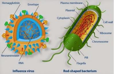 Perbedaan Bakteri Dan Virus Beserta Contohnya Situs Berita Pendidikan