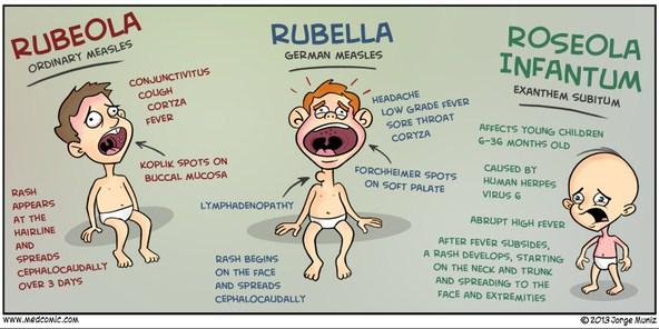 Pengertian, Penyebab, Gejala, dan Pengobatan Virus Rubella