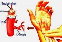 Pengertian, Fungsi, Ciri-Ciri Dan Jenis Pembuluh Nadi Arteri Terlengkap