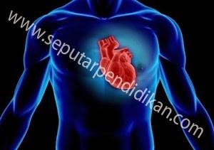 6 Fungsi Hati Manusia
