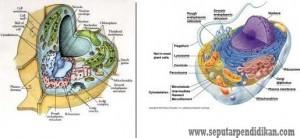 Perbedaan Dunia Hewan Dan Dunia Tumbuhan Lengkap