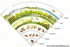 Pengertian Individu, Populasi, Dan Komunitas Pada Ekosistem