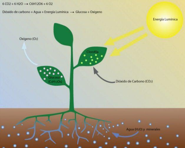 Pengertian, Fungsi, dan Proses Fotosintesis Pada Tumbuhan