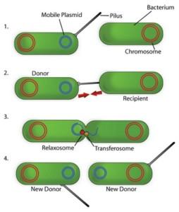 Macam-Macam Reproduksi Bakteri