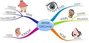 Pengertian dan Bagian-Bagian Panca Indera Manusia
