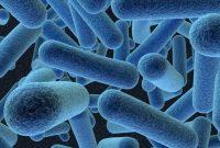 Macam-Macam Bakteri Yang Merugikan Bagi Manusia