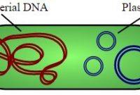 5 fungsi plasmid pada bakteri