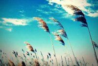 Pengertian, Sifat, Jenis, dan Faktor Terjadinya Angin