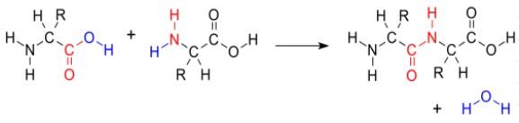 Rumus-Kimia-Protein
