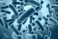 Klasifikasi Bakteri Berdasarkan Dinding Sel Flagel