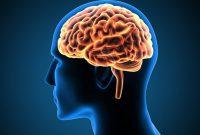 Perbedaan Otak Besar (Cerebrum) dan Otak Kecil (Cerebellum)