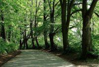 Jenis Hutan Beserta Fungsinya