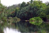 Pengertian, Contoh, Manfaat, Fungsi dan Ciri Hutan Suaka Alam