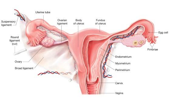 Pengertian, Jenis dan Ciri-Ciri Infertilitas Beserta Faktor Penyebabnya