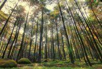 Pengertian, Syarat dan Tujuan Taman Hutan Raya