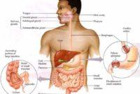 Pengertian dan Macam Metabolisme Pada Manusia