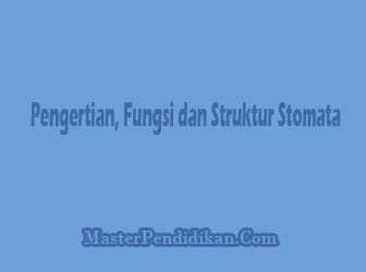 Pengertian,-Fungsi-dan-Struktur-Stomata