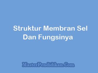Struktur-Membran-Sel