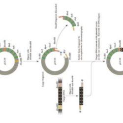 Kloning Gen dan Langkah-Langkah Prosesnya