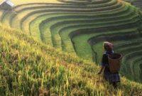 Potensi Negara Indonesia Sebagai Negara Agraris