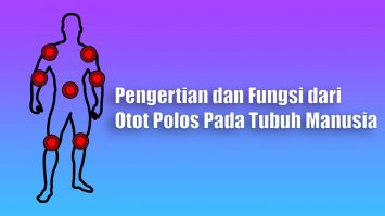 Pengertian dan Fungsi dari Otot Polos Pada Tubuh Manusia
